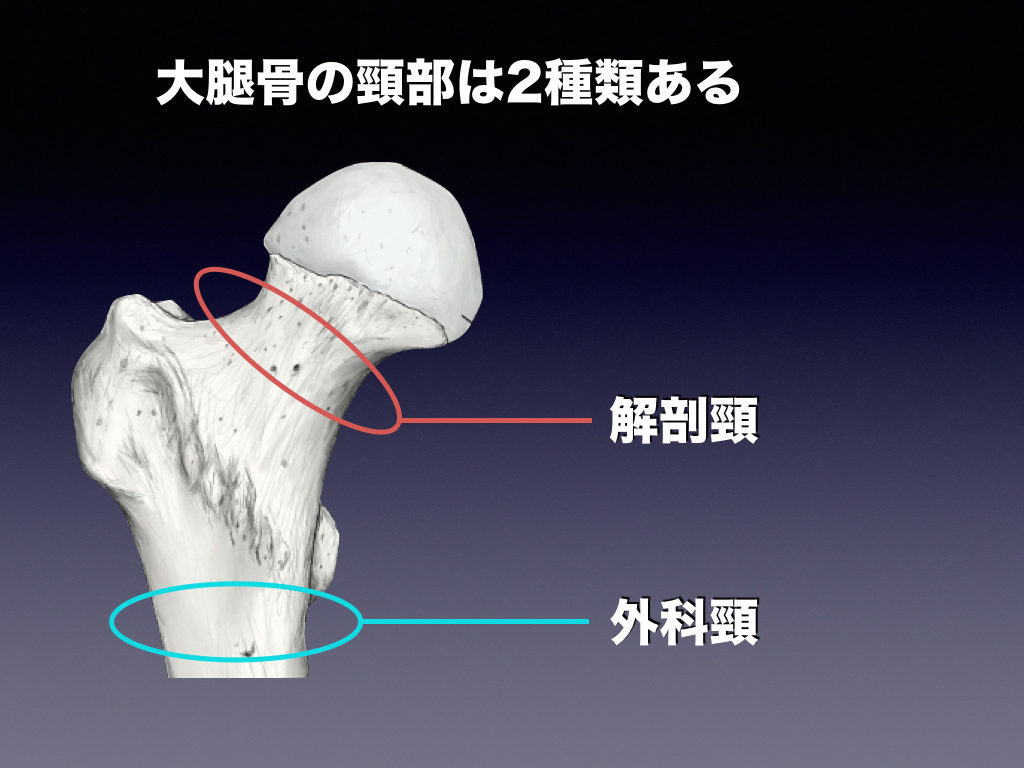 外科頸・解剖頸