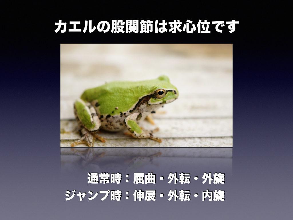 カエルの股関節
