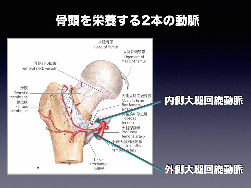 骨頭を栄養する2本の動脈