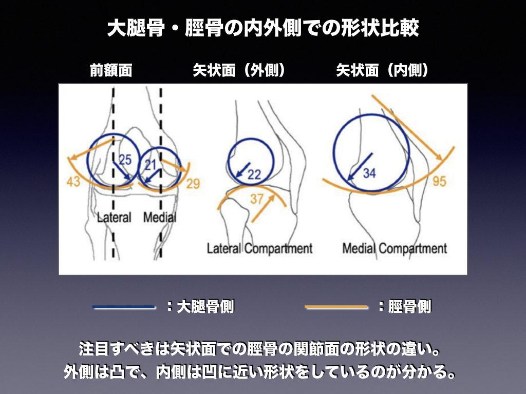 脛骨大腿関節の骨形状